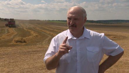Инновационный газовый комбайн тестируют в Гомельской области. Его хочет посмотреть президент