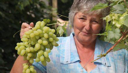 Согретые солнцем и любовью. Женщина в Гомельском районе выращивает около 60 сортов винограда