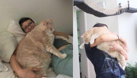 Парень и девушка взяли из приюта очень толстого кота и решили привести его в норму