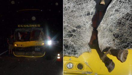 Опять ЧП с рейсовым автобусом. Ночью в Жлобинском районе Neoplan сбил лошадь, животное оказалось в салоне (видео)