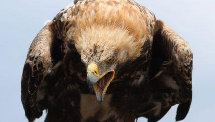 В Беловежской пуще замечен орел-могильник. Размах его крыльев достигает двух метров