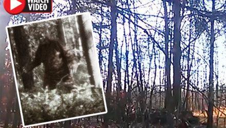 Установленная в лесу камера сняла доказательства существования йети