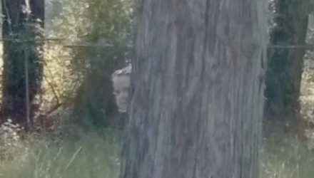 Пользователи Google Maps разглядели на кладбище кое-что действительно жуткое