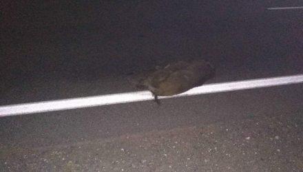 """В Речицком районе ехавшему в Гомель водителю """"подложили свинью"""", ещё одно авто перевернулось в кювете – пострадала 3-летняя девочка"""