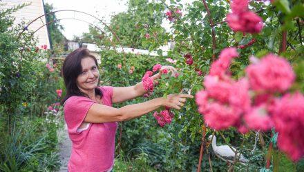 Сделать из пяти соток маленькую Италию… Более 50 хвойников выращивает гомельчанка Светлана Котлярова