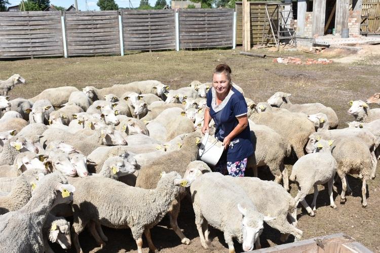 Секс на овчарне