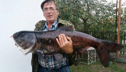 Вот это улов! Белорус поймал 14-килограммового толстолобика