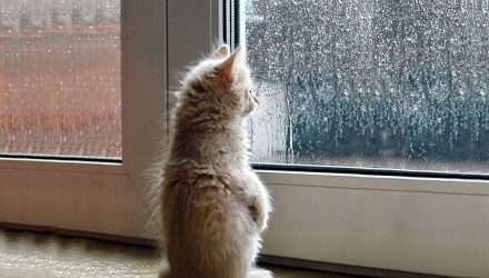 Бррр, ветрено и местами дождливо. Погода в Гомеле на неделю
