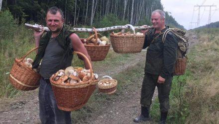С начала года отравились грибами 50 человек, в том числе и дети. Больше всего случаев в Минске и на Гомельщине