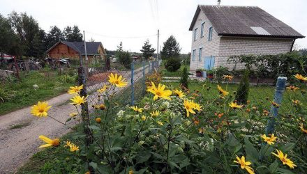 Соседские войны. Гомельчанка не может найти управу на соседку, которая засаживает её дом по периметру кустарниками и огурцами