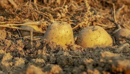 Синоптики советуют завершить уборку картофеля и овощей из-за грядущего похолодания