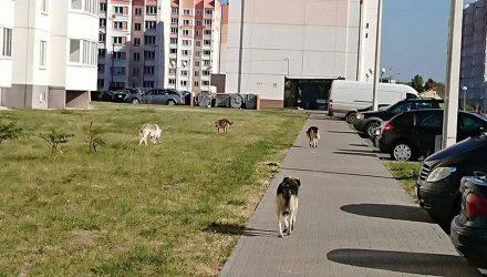 Окраинный микрорайон Гомеля атаковала стая бродячих собак