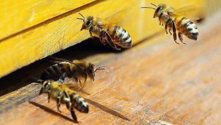 В Австралии убийцу пчёл посадили в тюрьму на год и обязали выплатить €20 тыс. штрафа