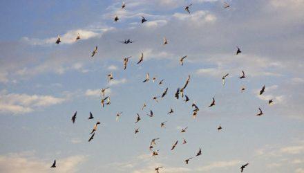 """""""Кружились над посёлком и кричали"""". В Карелии 100 перелётных птиц упали с неба"""