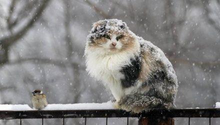Белорусские синоптики: в конце октября в Беларуси ожидается мокрый снег