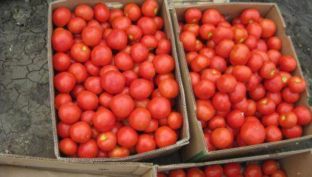 Парень похитил две тонны помидоров и торговал ими на ярмарке в Гомеле