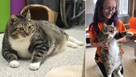Добрая история. Как через фейсбук нашли хозяина толстому коту по кличке Пончик