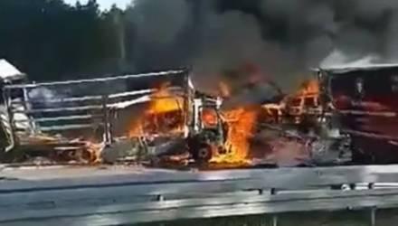 Жуткое ДТП в Германии: белорусский дальнобойщик при аварии не смог выбраться из кабины и сгорел заживо
