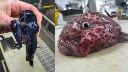 Фантастические твари-3: новая часть подборки снимков странных и страшных рыб из инстаграма мурманского моряка