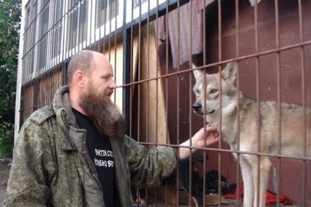 Мужчина поймал в лесу волка и поселил его на балконе