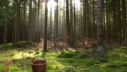 Под Гомелем госавтоинспекторы нашли заблудившихся в лесу мужчину и его 10-летнюю дочь