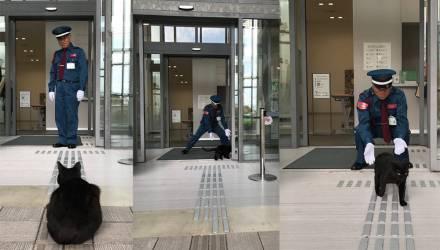 В Японии два кота уже два года пытаются зайти в музей, но им мешает охранник. За «войной» следят тысячи людей в Твиттере