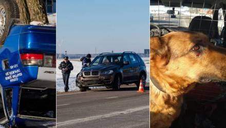Под Светлогорском BMW протаранил милицейский ВАЗ. Больше всех пострадала служебная собака