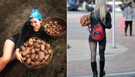 На каждого белоруса производится 675 кг картофеля и 771 кг молока. Мы в лидерах среди стран СНГ