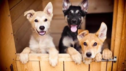 Благотворительная акция «Подари им шанс» в помощь животным пройдёт в Гомеле