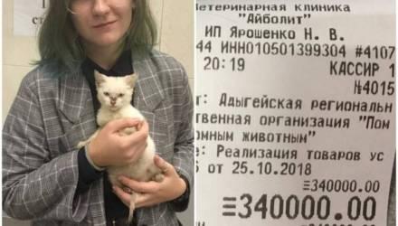 Жительница Адыгеи погасила долг приюта для животных в 340 тысяч рос. рублей, чтобы отдать туда котёнка