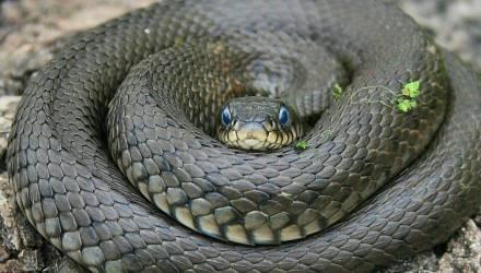 Это Беларусь, детка! Жильцы квартиры нашли в шкафу чужую метровую змею