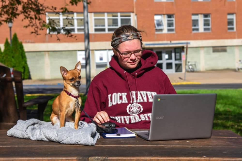 В Университете Пенсильвании студентам разрешили держать кошек и собак