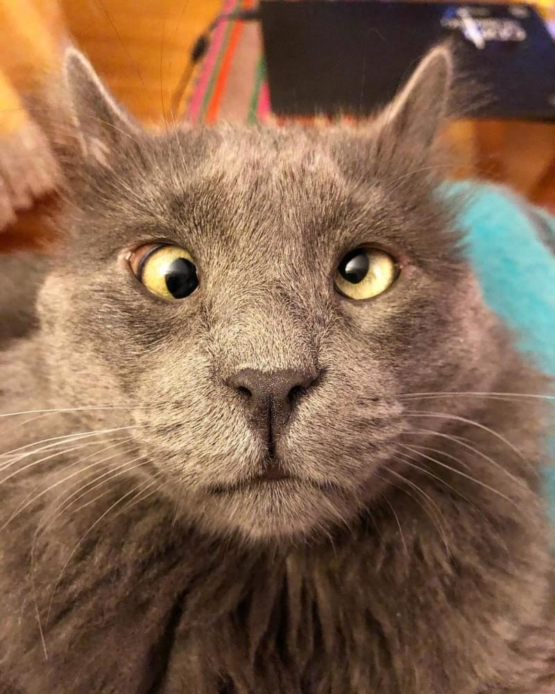 договорная, коты с косыми глазами фото карагодин