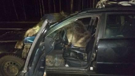 ДТП с лосями на трассе М1: за рулем Audi была женщина. Одно животное влетело в салон авто