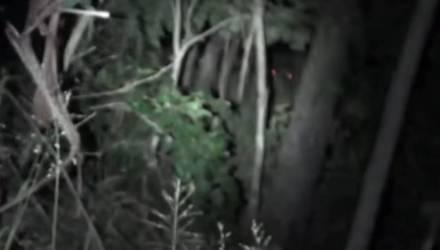 Охотник снял ночью в лесу огромное существо с красными глазами, следящее за ним – видео