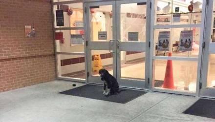 Каждое утро пёс сидел возле дверей школы и вилял хвостом, ожидая помощи