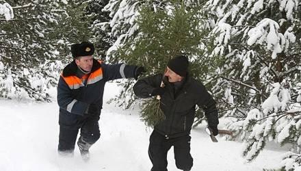 Памятка для тех, кто мечтает сам срубить в лесу новогоднюю ёлочку