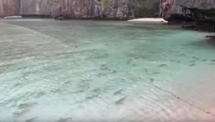 """Вместо туристов — акулы. Бухту из фильма """"Пляж"""" заполонили хищники"""