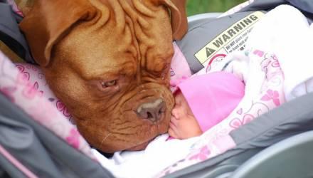 Как собаки реагируют на нового маленького человека в семье: 10 примеров