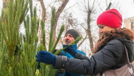 Где в Гомеле можно купить живую новогоднюю ёлку