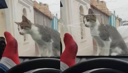 Мужчина хотел напугать кота и вскоре об этом пожалел – видео