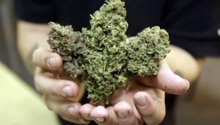 Под Гомелем молодой человек добился необычайно высокого качества марихуаны. Достижением заинтересовалась милиция