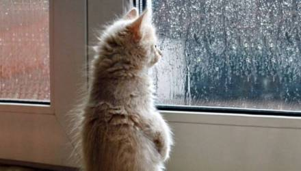 Опять снегодождь и метель. Погода в выходные в Гомеле – так себе