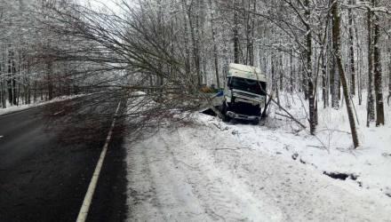 Фотофакт: фура вылетела в кювет на трассе Светлогорск-Речица и снесла несколько деревьев