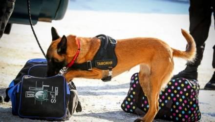 На таможне собака унюхала опасный психотроп у белоруса, который возвращался из Украины