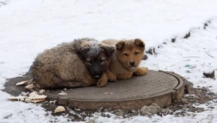 Как можно решить проблему бездомных животных? Интересуемся у гомельчан