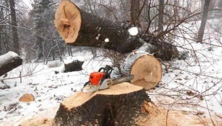 На Гомельщине человека убило деревом