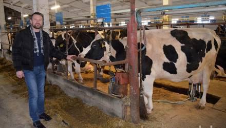 Белорусские голштины. За 20 лет в гомельском КСУП «Брилёво» надои молока выросли в 1,5 раза
