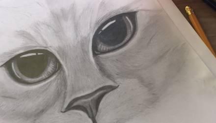Вы видите кота? Оптическая иллюзия взволновала пользователей Сети