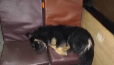 В Бресте потерявшийся пёс около полугода ездил в автобусах в надежде найти своих хозяев. И нашёл!